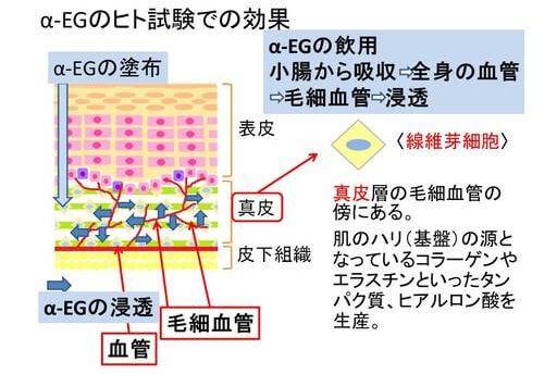 日本酒による肌の若返り効果